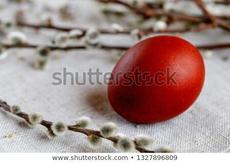 ストックフォト: 卵 · 手のひら · 写真 · 白 · 人間 · イースター