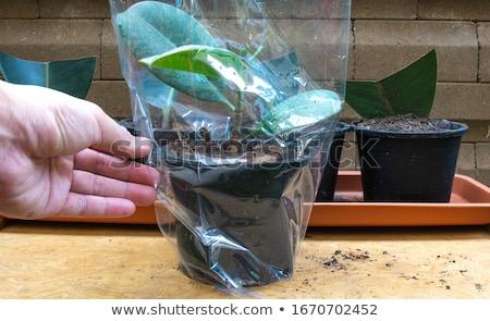 袋 工場 在庫 写真 緑 オーガニック ストックフォト © pkdinkar