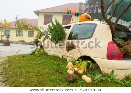 Wrecked Car with Plants Stock photo © tepic