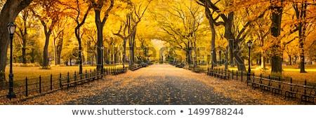 Jesienny parku drogowego rano charakter tle Zdjęcia stock © joyr