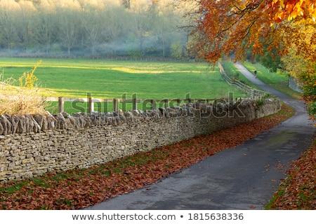 Tranquilo rural camino árboles hierba azul Foto stock © rabbit75_sto