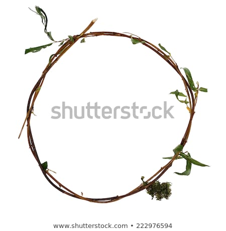 Branch with a few green leafs Stock photo © boroda