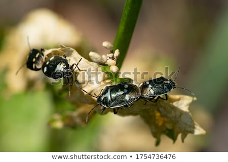 Bugs Mating on Leaf Stock photo © azamshah72