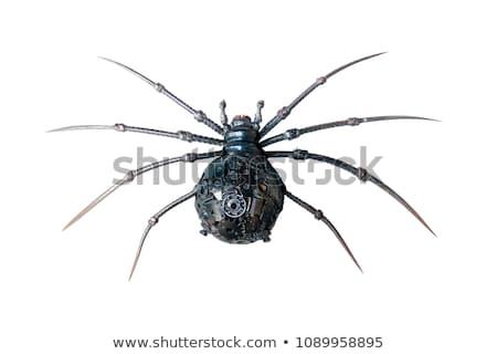 металлический · Spider · покрытый · искусственный · металл · искусства - Сток-фото © prill