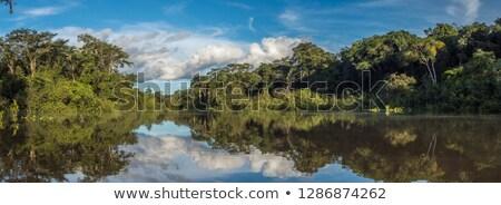 Amazon indian wood Stock photo © Witthaya