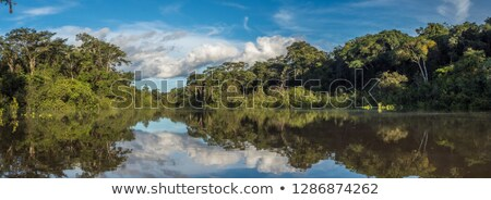 Amazon Hint ahşap simge orman dizayn Stok fotoğraf © Witthaya