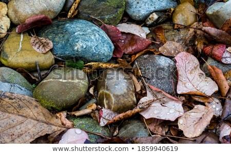葉 ぼやけた 空 ツリー オレンジ 赤 ストックフォト © eltoro69
