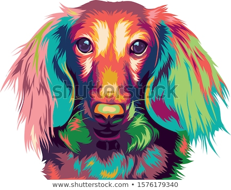 long dachshund dog cartoon for coloring Stock photo © izakowski