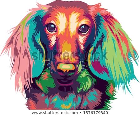 такса · собака · характер · Cartoon · иллюстрация - Сток-фото © izakowski