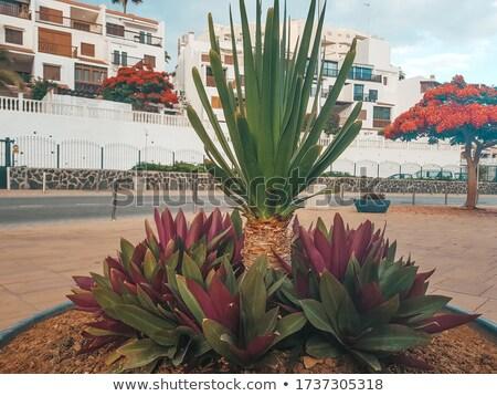 Single palmtree on a little island stock photo © Refugeek