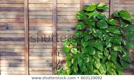 ogrodzenia · zielone · roślin · wiosną · trawy - zdjęcia stock © inxti