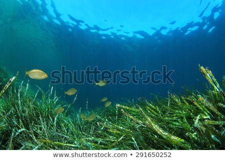 Mediterrán zöld hínár tengerpart víz tengerpart Stock fotó © lunamarina