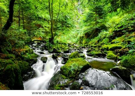 Küçük orman nehir güzel çağlayan ontario Stok fotoğraf © cmeder