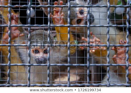 Małpa klatki zoo Tajlandia twarz oczy Zdjęcia stock © stoonn