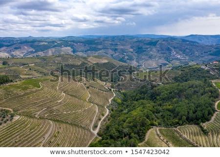 Porta vinho foto uvas região Portugal Foto stock © ajn