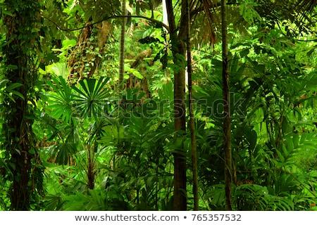 Tropikalnych Rainforest krajobraz wyspa charakter piękna Zdjęcia stock © pxhidalgo