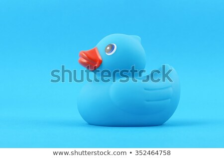 Blue duck isolated Stock photo © michaklootwijk