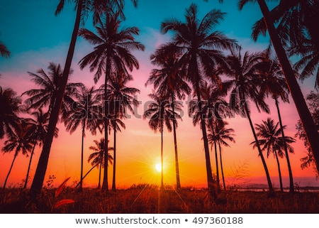 beautiful view of a tropical beach with palm leaf on sunset stock photo © elisanth