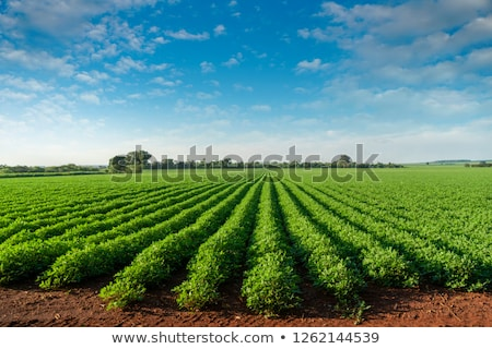 Frescos plantas plantación campo nuevos principio Foto stock © franky242