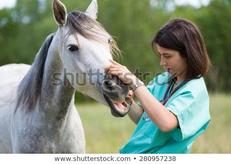 portret · dierenarts · veld · vee · boerderij · baan - stockfoto © highwaystarz