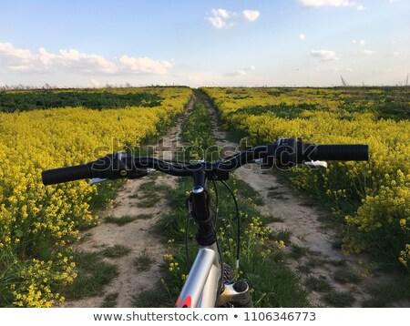 gyönyörű · nő · öreg · bicikli · búzamező · szexi · boldog - stock fotó © geribody