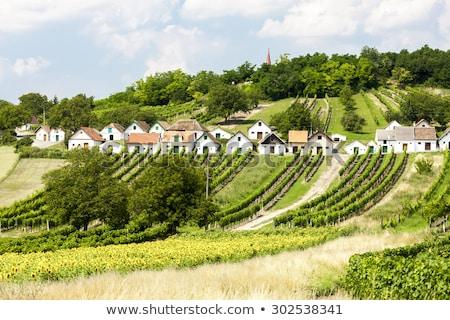 wine cellars with vineyards galgenberg lower austria austria stock photo © phbcz
