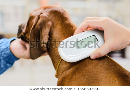 Microchip Stock photo © idesign