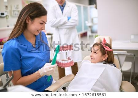 стоматолога девочку зубов модель стоматологических Сток-фото © wavebreak_media