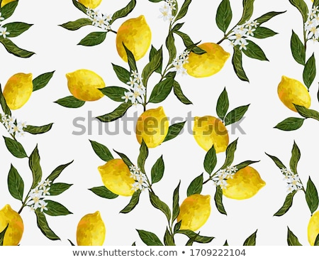 Flower garden Stock photo © manfredxy