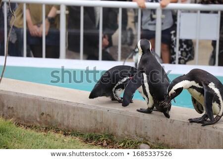 Rocha diversão pedra animal pinguim aquário Foto stock © wavebreak_media