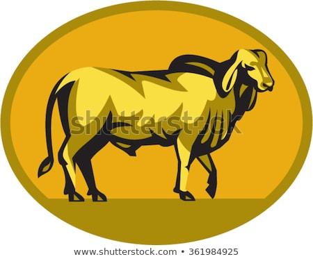 牛 オーバル レトロな 実例 見える フロント ストックフォト © patrimonio