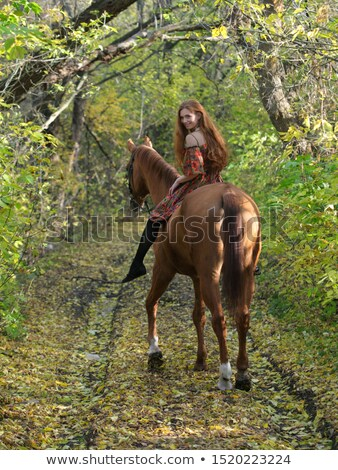 Bareback saddle on a stand Stock photo © njnightsky