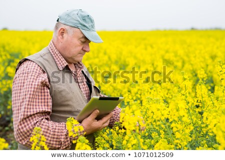 Agronomist standing in field of blooming cultivated rapese Stock photo © stevanovicigor