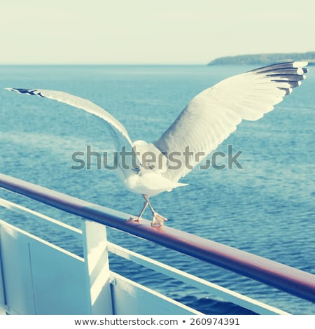 Seagull bird looking out to sea Stock photo © latent