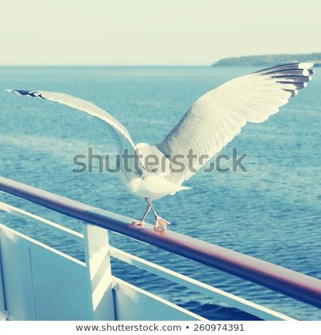 Gaviota aves mirando fuera mar grande Foto stock © latent