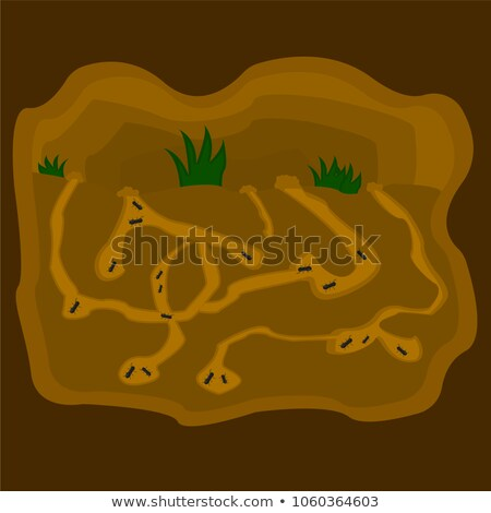 anthill ants burrow Stock photo © romvo