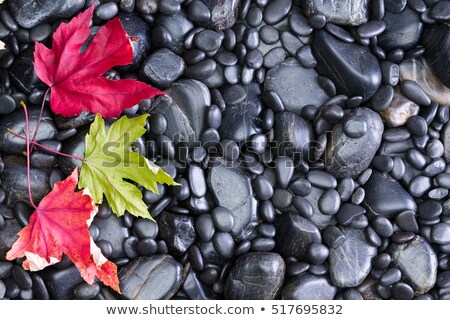 conceptual view of autumn leaves on black rocks stock photo © ozgur