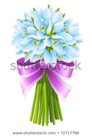 primavera · fiori · isolato · bianco · fiore · sfondo - foto d'archivio © loopall