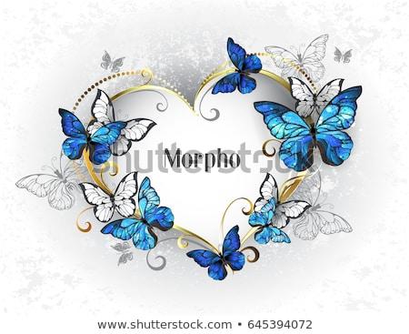 Quadro borboletas azul realista cinza projeto Foto stock © blackmoon979