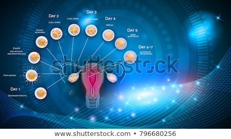 abstract female uterus artistic illustration stock photo © tefi