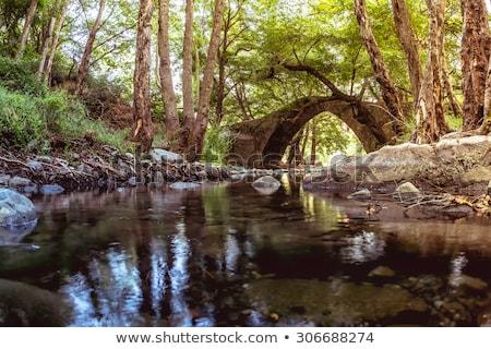 híd · napos · zöld · erdő · fák · tavasz - stock fotó © kirill_m