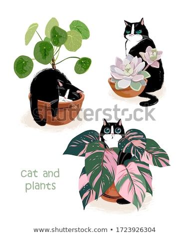Três cacto plantas ilustração fundo arte Foto stock © bluering