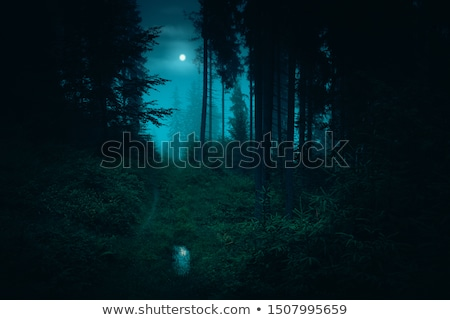 escuro · noite · floresta · cena · ilustração · folha - foto stock © bluering