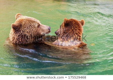 Bear Park in Bern, Switzerland Stock photo © oliverfoerstner
