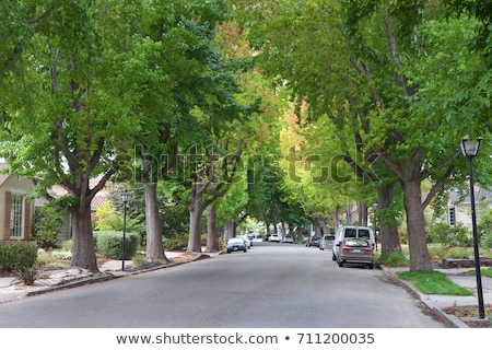 Tree-Lined Road in Northern California stock photo © Backyard-Photography