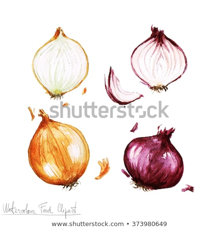 Watercolor illustration of red onion Stock photo © Sonya_illustrations