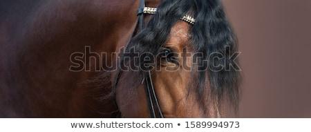 paard · eerlijke · hoed · toeristische · toerisme · Spanje - stockfoto © asturianu
