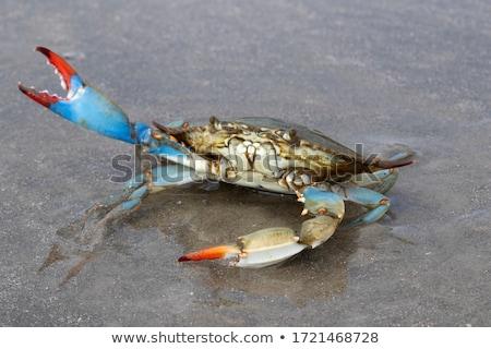 crab claw stock photo © vichie81