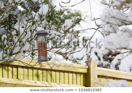 Uccello arachidi giardino neve Foto d'archivio © sarahdoow