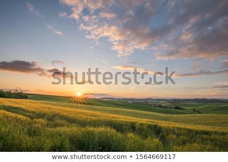 イタリア 風景 トスカーナ 丘 日没 ストックフォト © Konstanttin